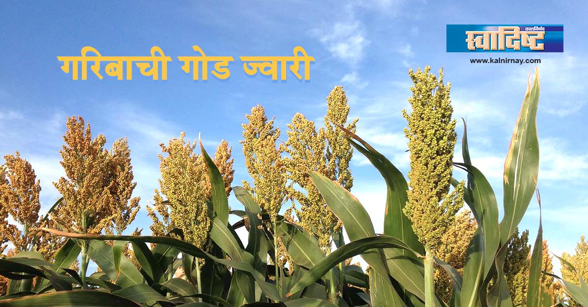 भाकर | Jowar Bhakri Benefits | Bajra Atta | Jonna Rotte Benefits